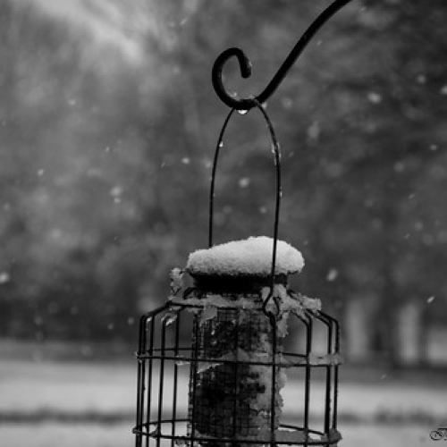 "Gotas de nieve • <a style=""font-size:0.8em;"" href=""http://www.flickr.com/photos/132080213@N08/26007161872/"" target=""_blank"">View on Flickr</a>"